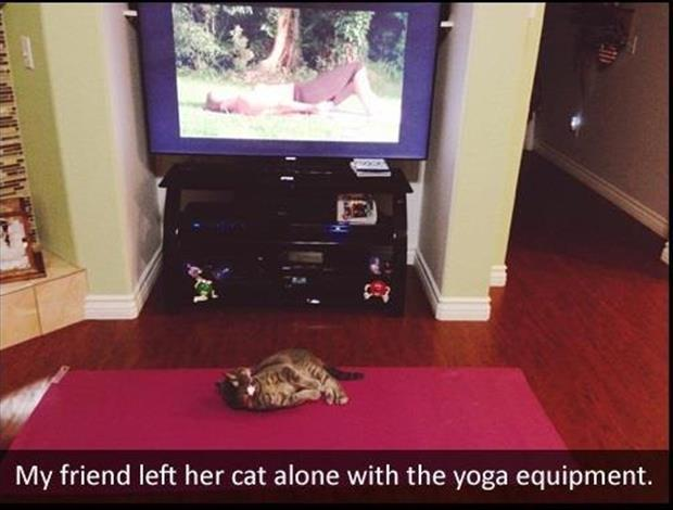 the cat does yoga