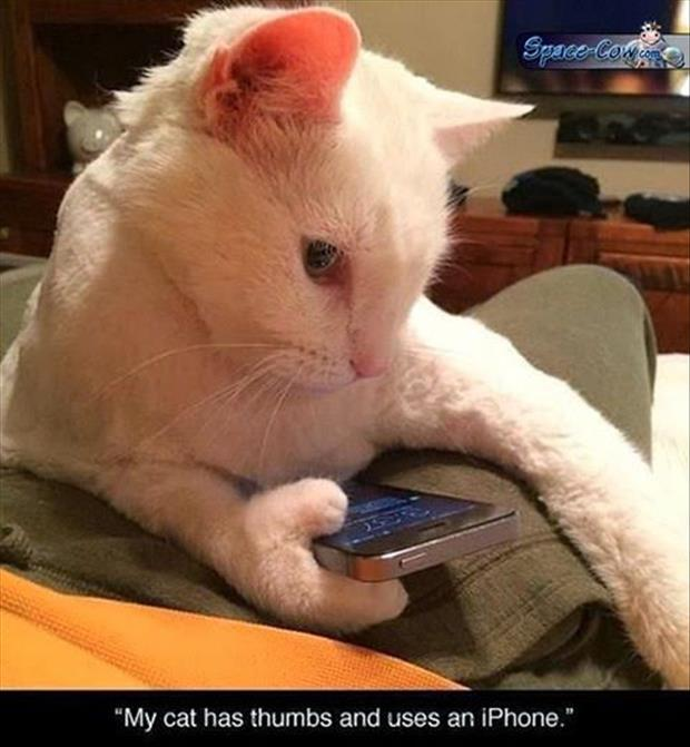 the cat has phones