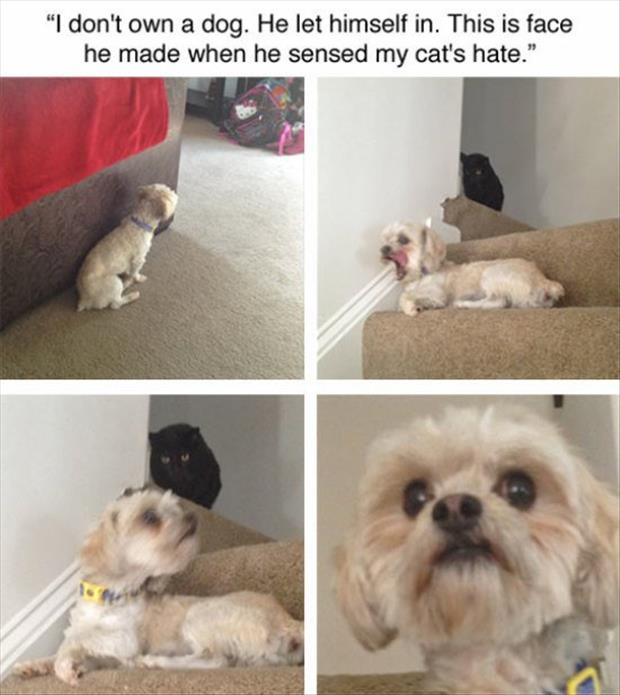 the cat hates the dog