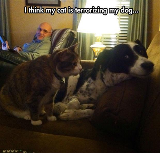 the cat is freaking the dog out