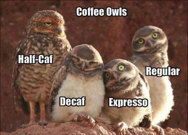 the coffee owls