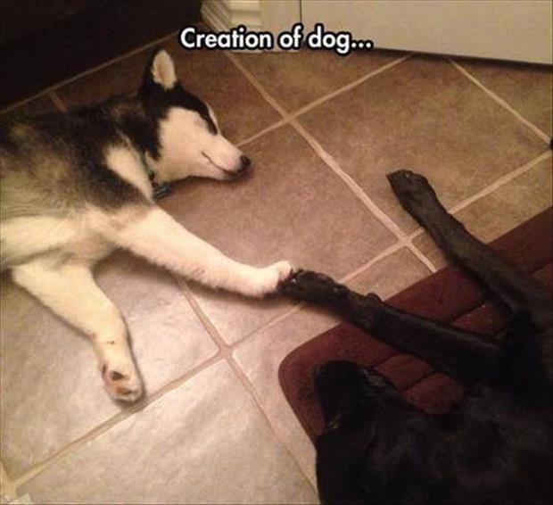 the creation of dog
