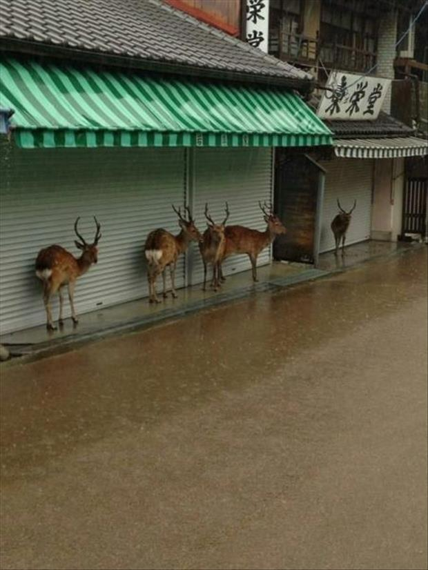 the deer staying dry