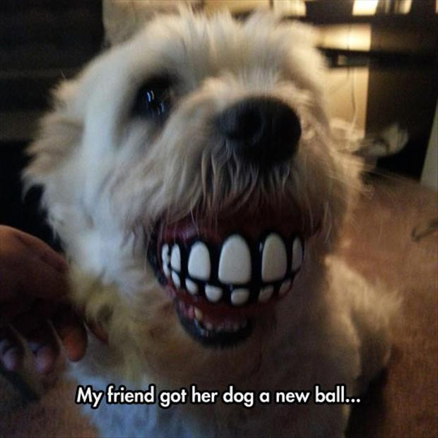 the dog got a ball