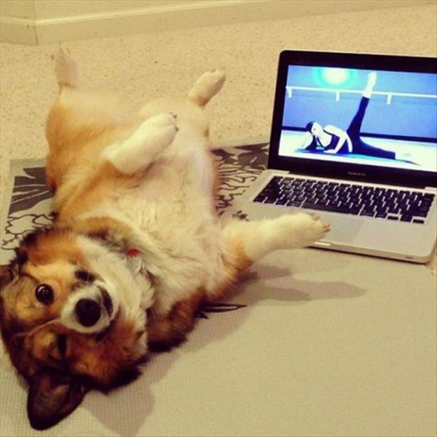 the dog knows yoga