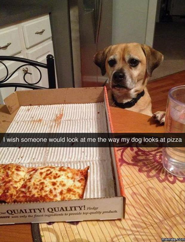 the dog loves pizza