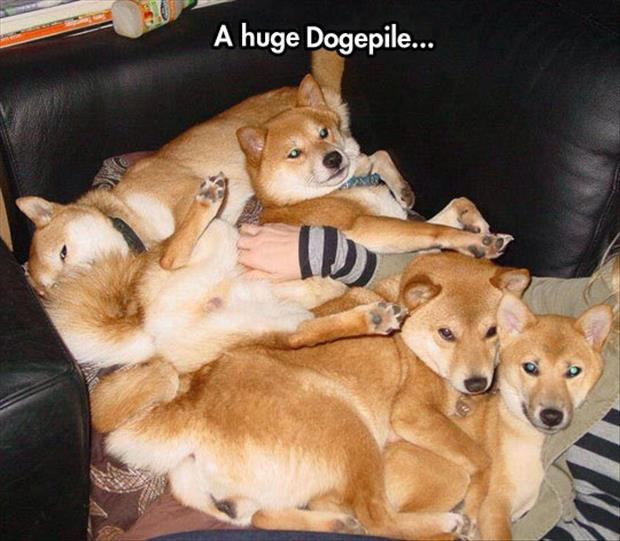 the dog pile