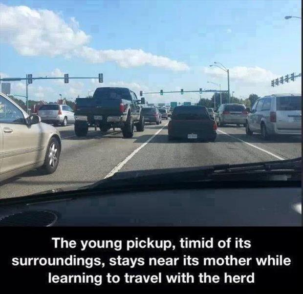 the young truck