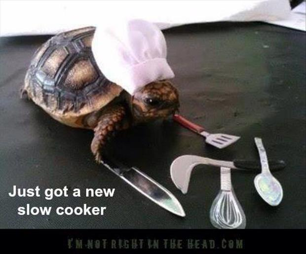 turtle cooker