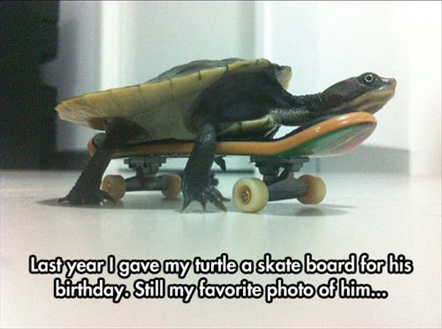 turtle loves the skateboard