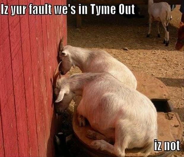 goats in time out