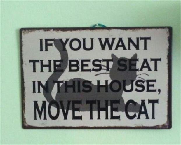 if you want the best seat in the house