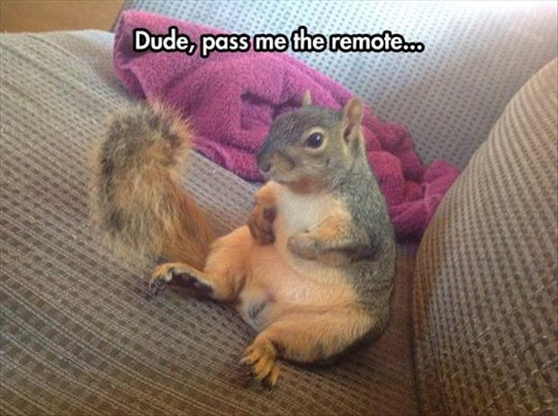 pass me the remote