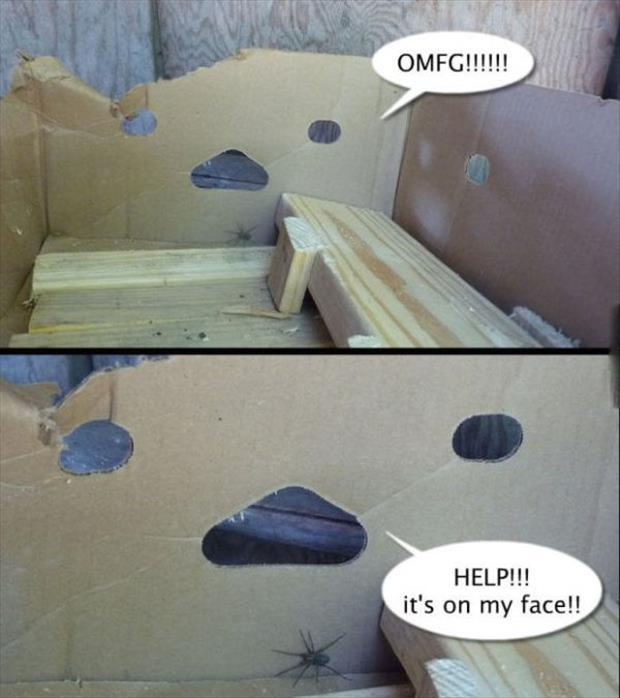 spider on my face