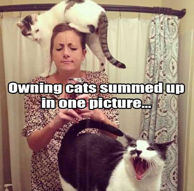 that's what its like to own a cat