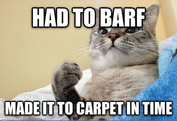 the cat barf
