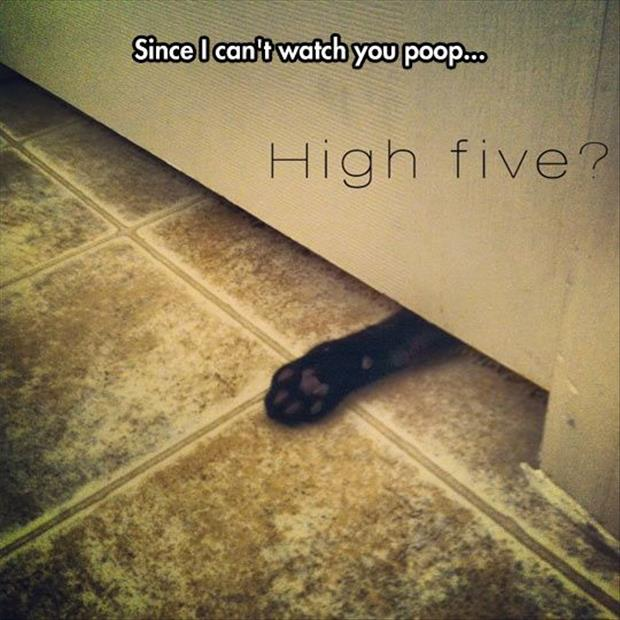the cat watching you poop