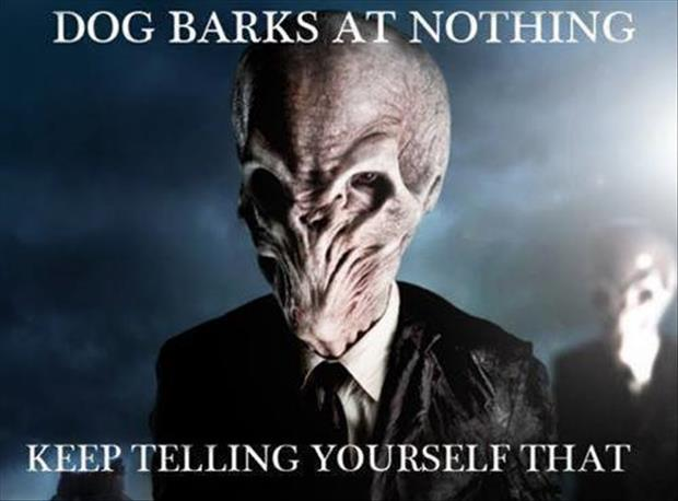 the dog barks at nothing