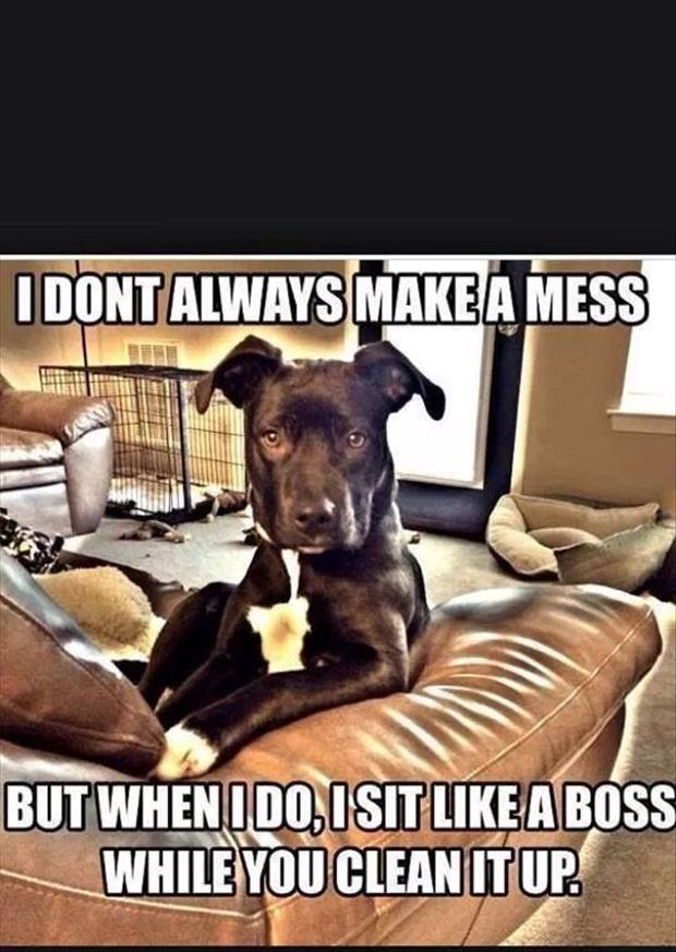 the dog makes a mess