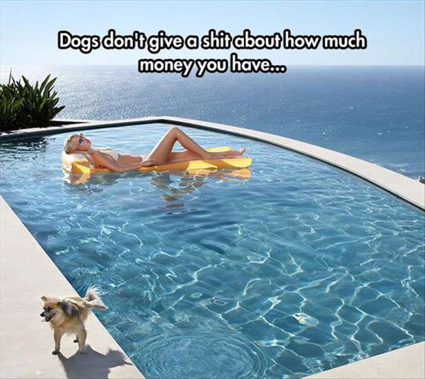 the dogs don't care how rich you are