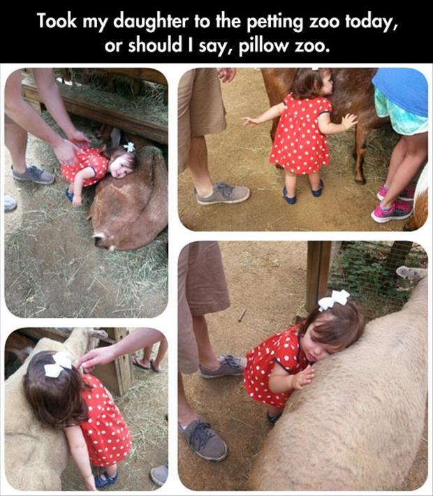 the pillow zoo