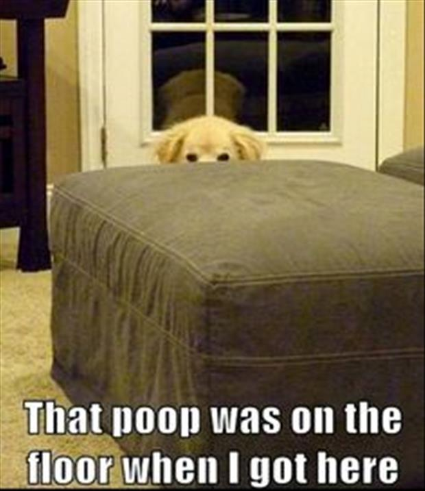 the poop was on the floor when I got here