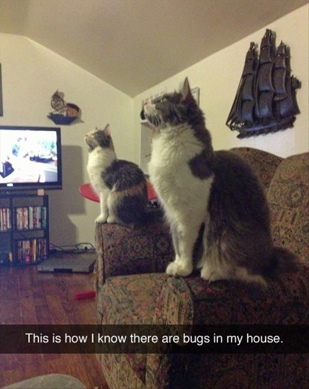 there are bugs in my house