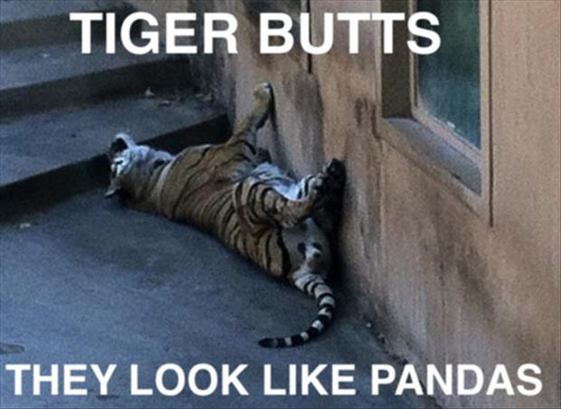 tiger butts