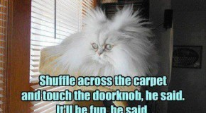 Beware Of Animals With Funny Captions – 30 Pics