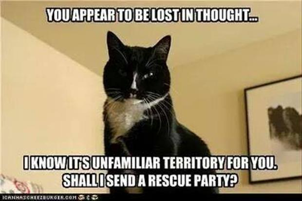 funny aninmals (19)