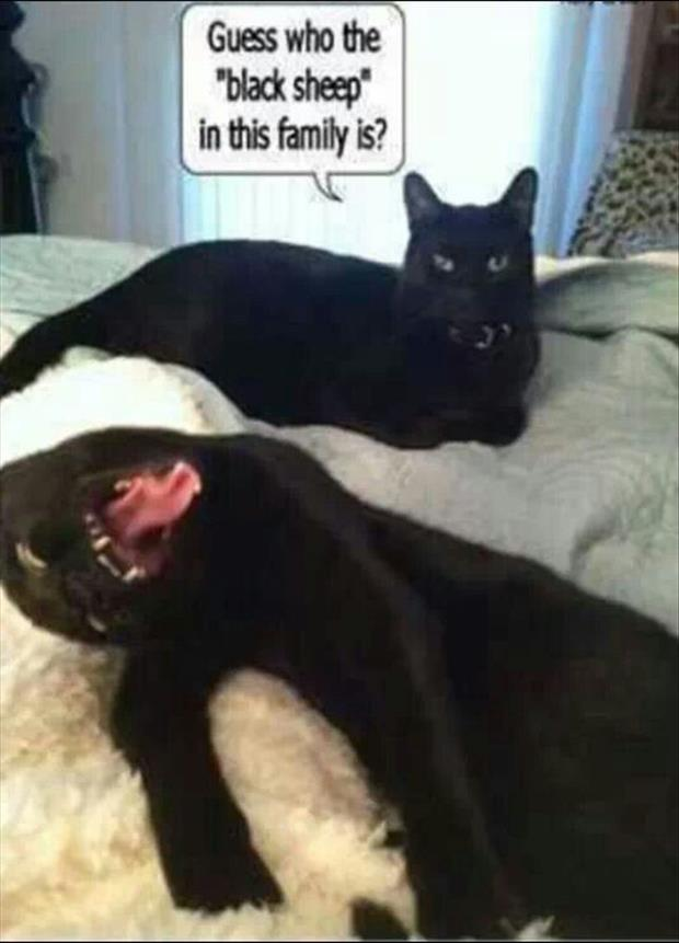 Funny Cats Its What The Internet Is All About