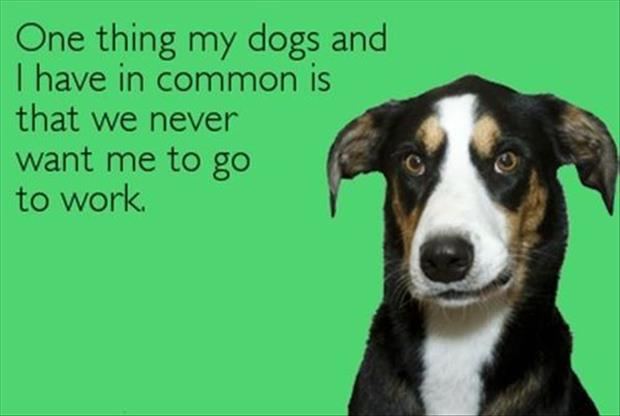 I have in common with the dog