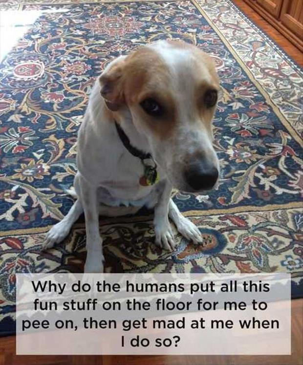dog thoughts (3)
