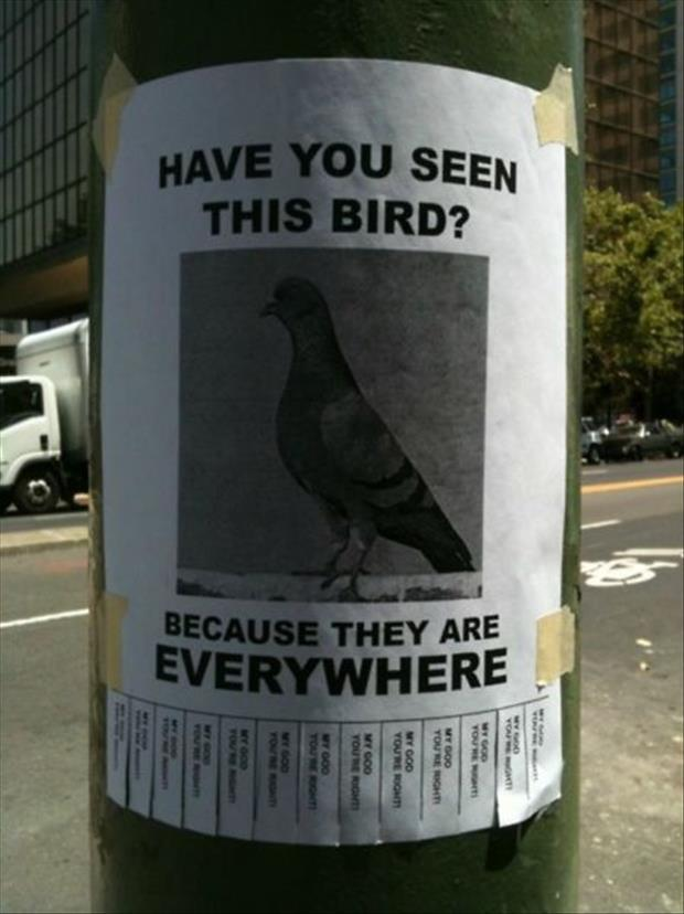 funny flyers (15)