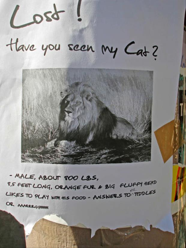 funny flyers (16)