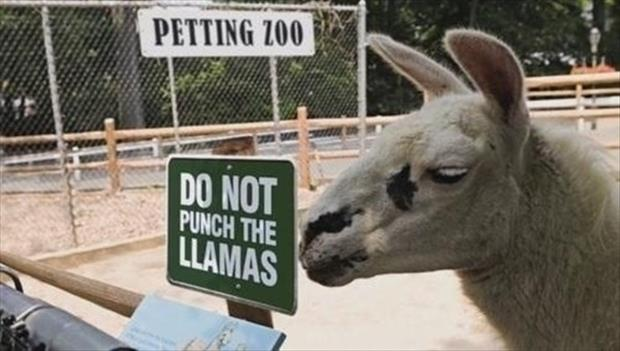 funny signs (8)
