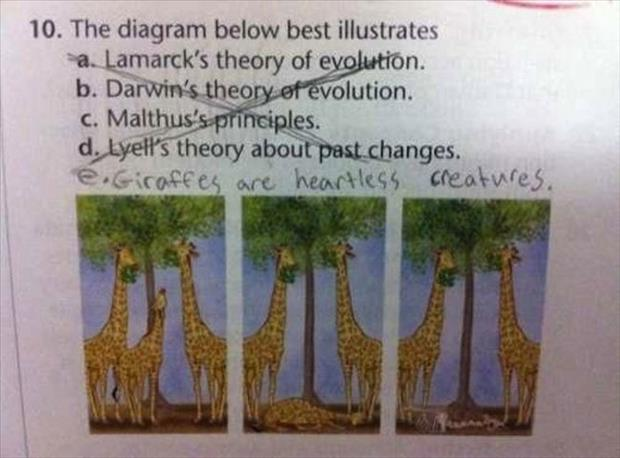 funny test answers (10)
