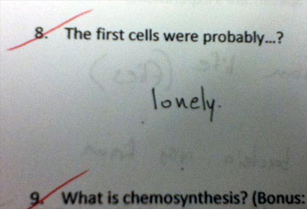 funny test answers (13)