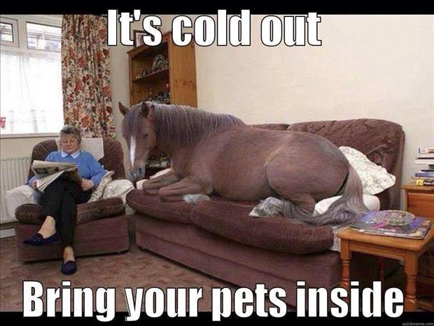 it's cold out bring your pets inside