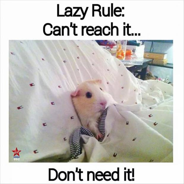 lazy rules