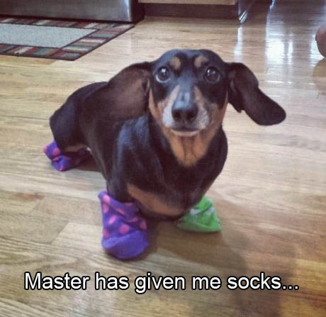 master has given me socks