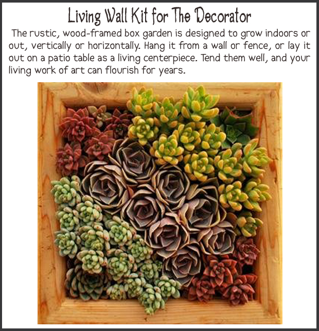 Fun Christmas Gift Ideas- Living wall