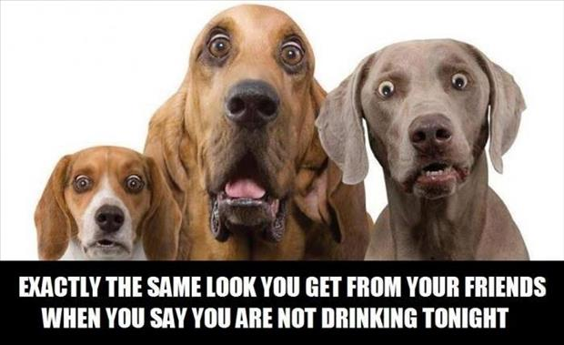 a dog not drinking