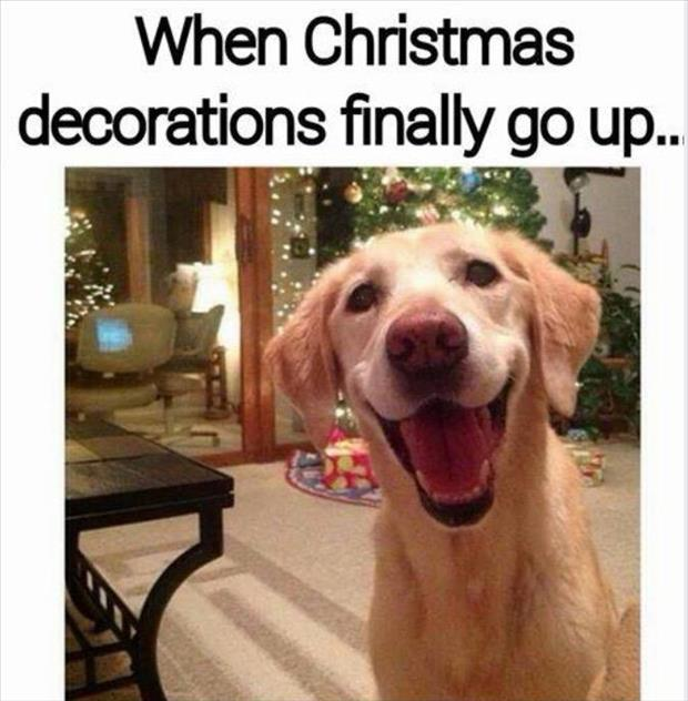 christmas decorations go up