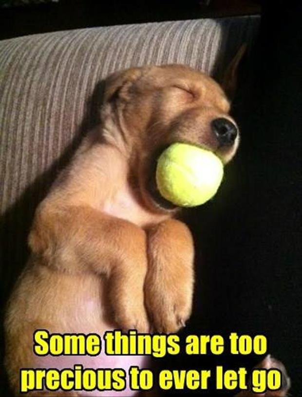Funny Animal Pictures Of The Day 30 Pics