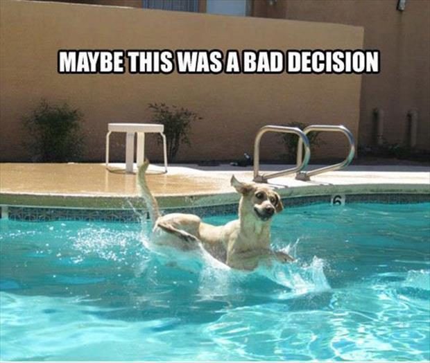 Funny animal pictures of the day 24 pics - Draining a swimming pool may be a bad idea ...