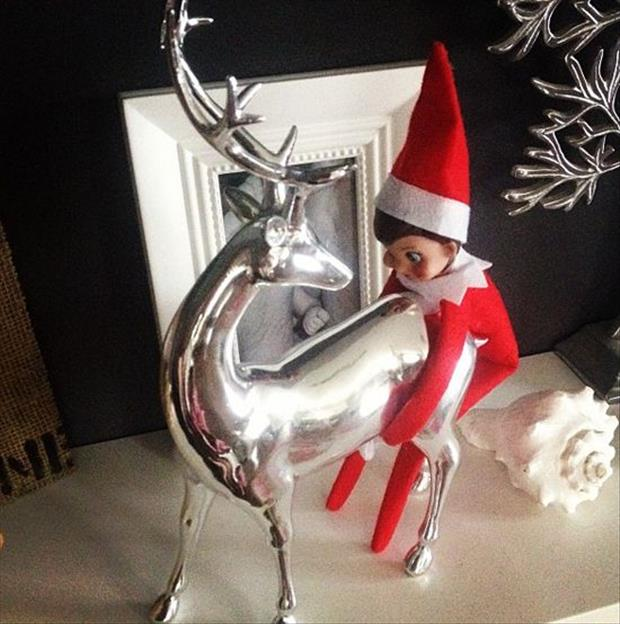 funny elf on the shelf (7)