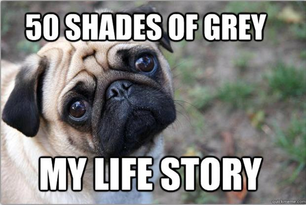 Funny Memes About Life Struggles: Life And Times Of A Dog, The Struggle Is Real
