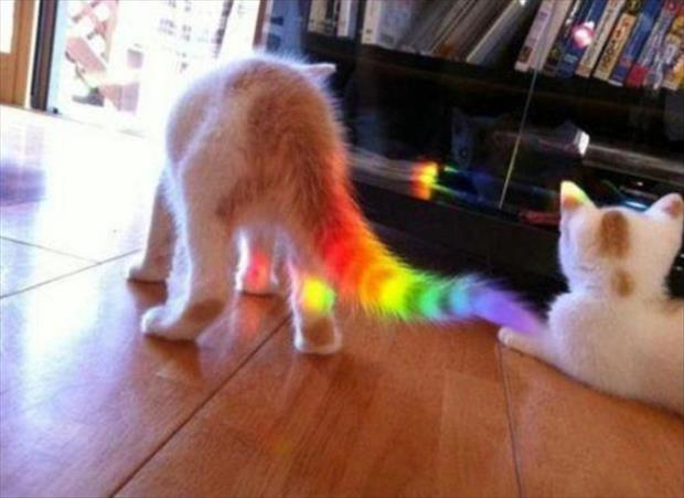 funny rainbows (1)