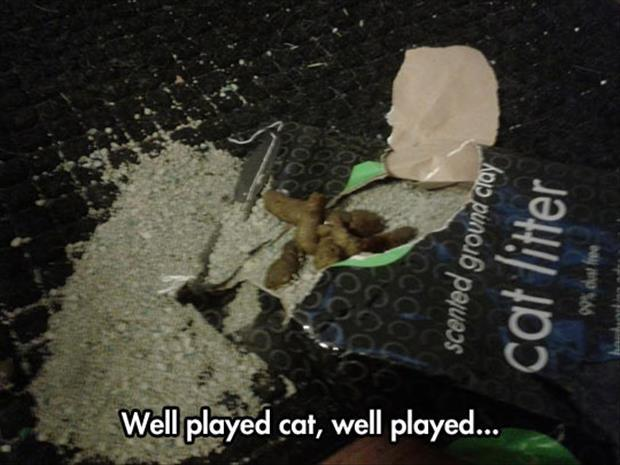 well played cat
